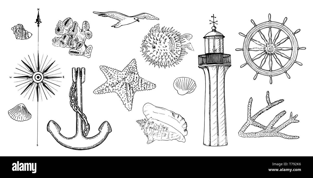 Naval set nautical symbols. Gulls, helm, steering wheel, anchor, light house, coral, shell, wind rose, swellfish, sea star, starfish, Stock Vector