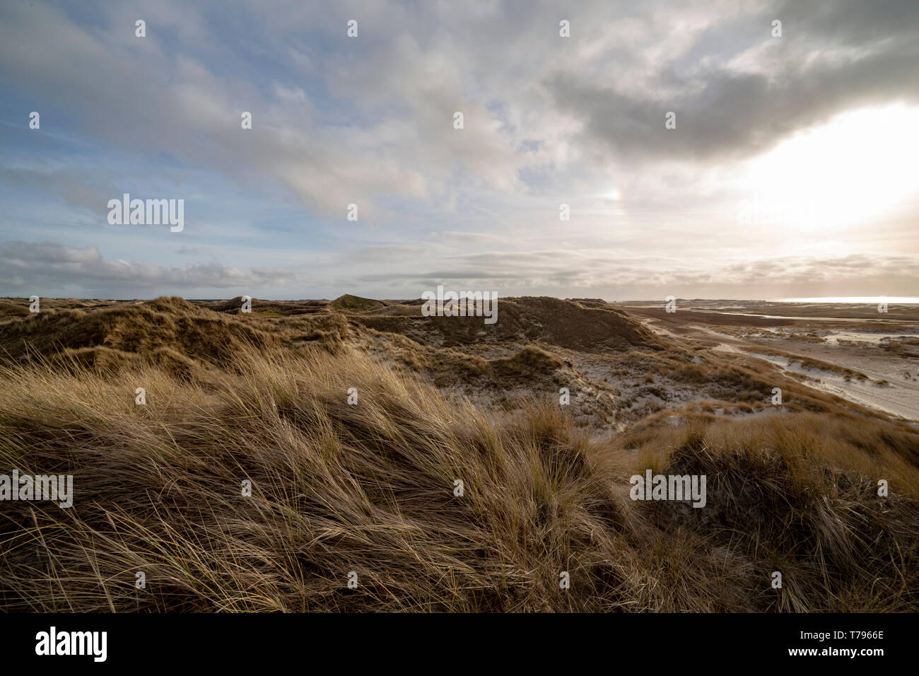 Beautiful evening atmosphere of the island of Amrum. Impressive dunes in back light with light cloudy sky. The sun almost shines through. North Frisia - Stock Image