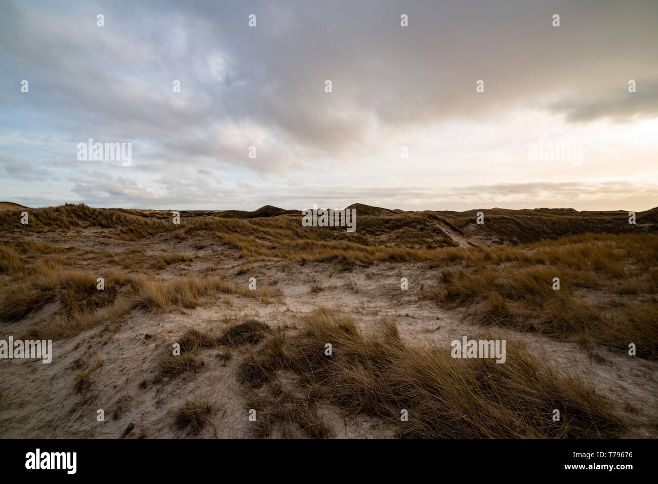 Beautiful backlit evening atmosphere of the island of Amrum. Impressive dunes in back light with light cloudy sky. The sun almost shines through. Nort - Stock Image