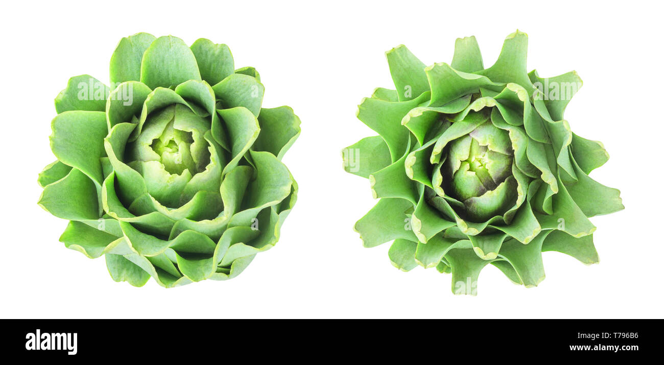 Raw artichoke head, top view, isolated on transparent background - Stock Image