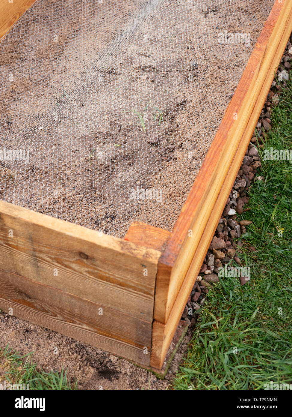 Raised bed lined with chicken wire to keep gophers, voles and moles out. Stock Photo