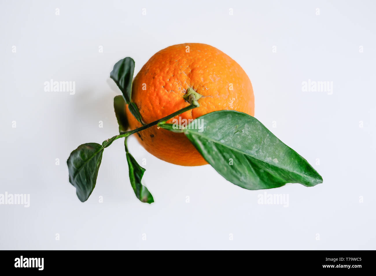 Natural single orange with green leaves on a plain light grey background. - Stock Image