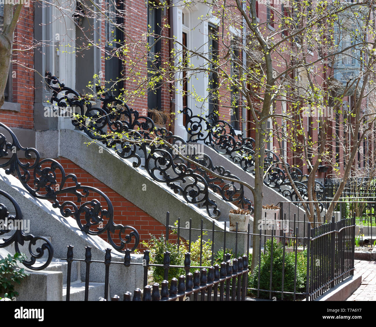 Elegant cast iron railings in Boston South End. Running rose pattern on decorative handrails, granite stone steps, brick facades, bright spring leaves - Stock Image