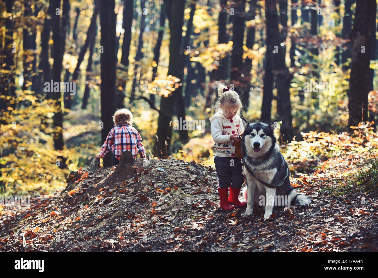 Sad little girl and boy with big dog in forest in autumn - Stock Image