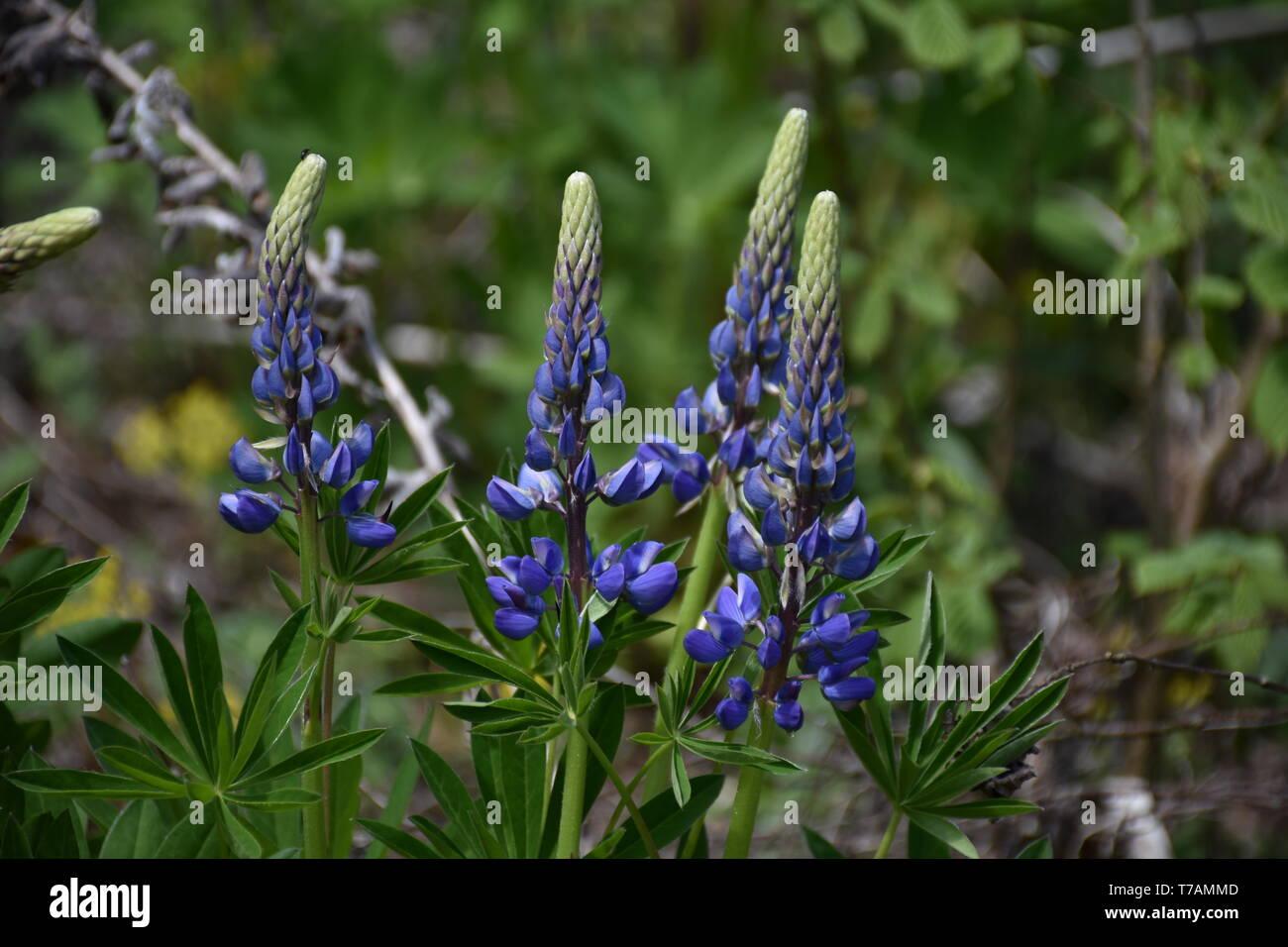 Frühling, Jahreszeit, Blume, Blumen, blühen, wachsen, gedeihen, Wald, Frühlingsgruß, Blüte, Blüten, Blütenpracht, Wiese, Waldwiese, Lichtung, Waldlich - Stock Image