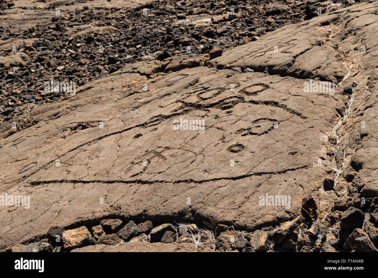 Petroglyphs in Waikoloa Field, on the King's Trail ('Mamalahoa'), near Kona on the Big Island of Hawaii. Carved into volcanic rock, the earliest of th - Stock Image