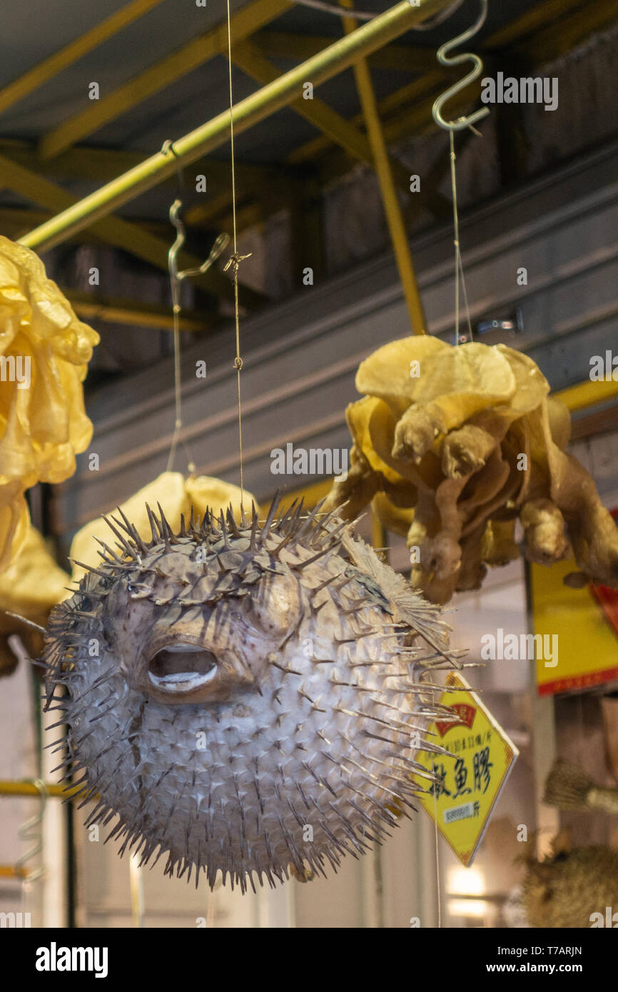 Hong Kong, China - March 7, 2019: Tai O Fishing village. large gray spikefish hangs from ceiling on display in seafood store among yellow products. - Stock Image