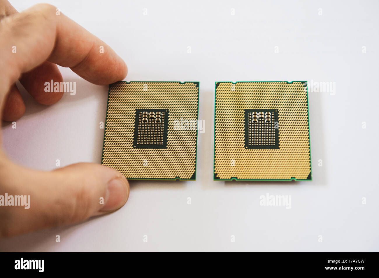 Man hand comparing two new powerful workstation CPU processors before service new computer workstation server - Stock Image