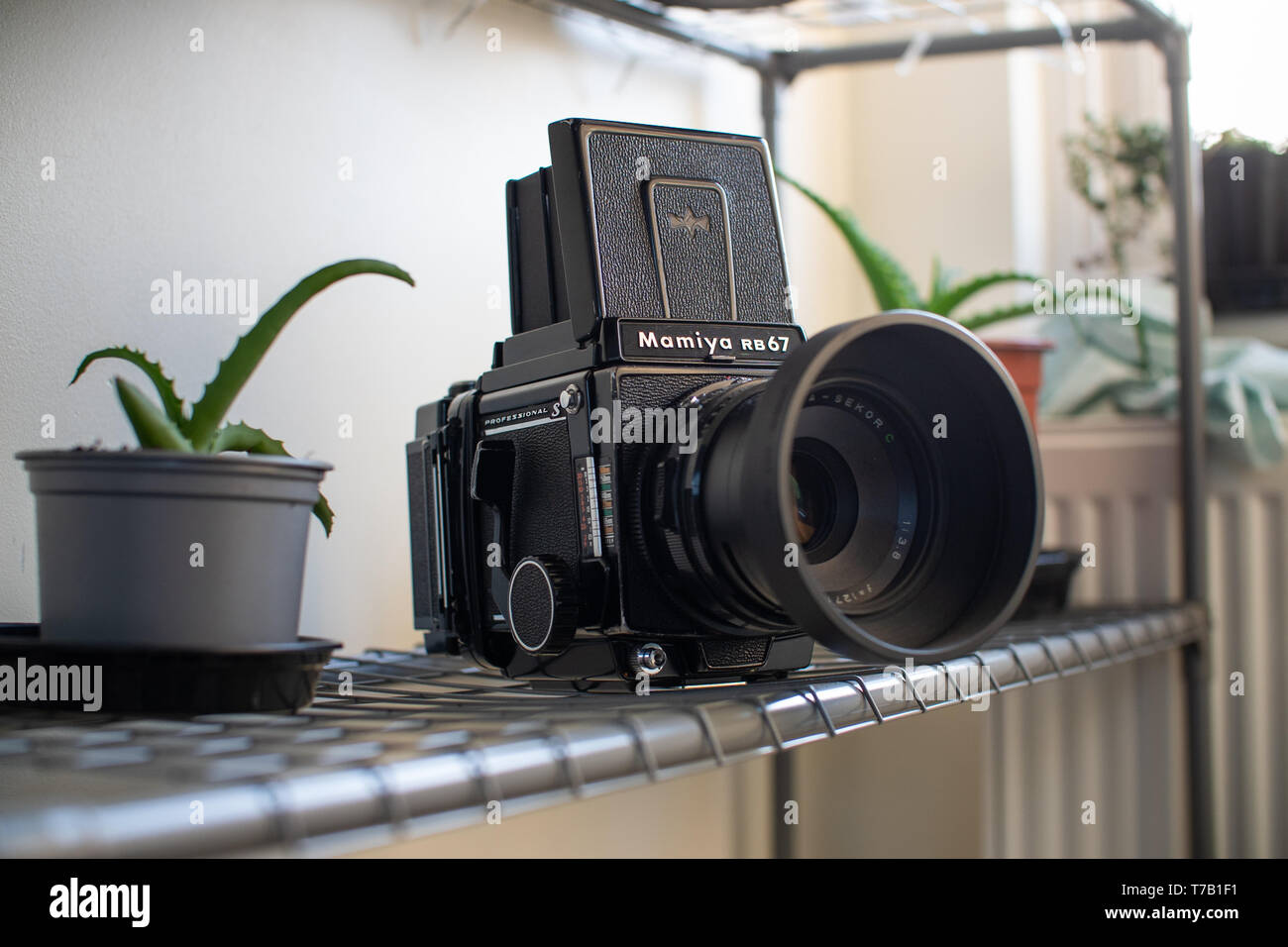 A Mamiya medium format camera sat on a metallic shelf with some house plants in the foreground and background - Stock Image