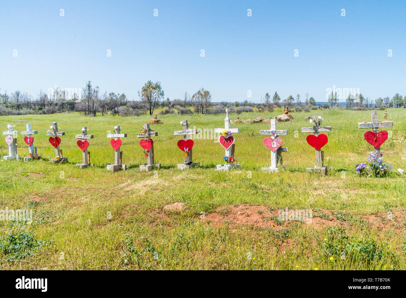 86 crosses were planted to memorialize the victims of the Camp Fire disaster in Paradise, California. The crosses were the idea of Greg Zanis, from Ch - Stock Image