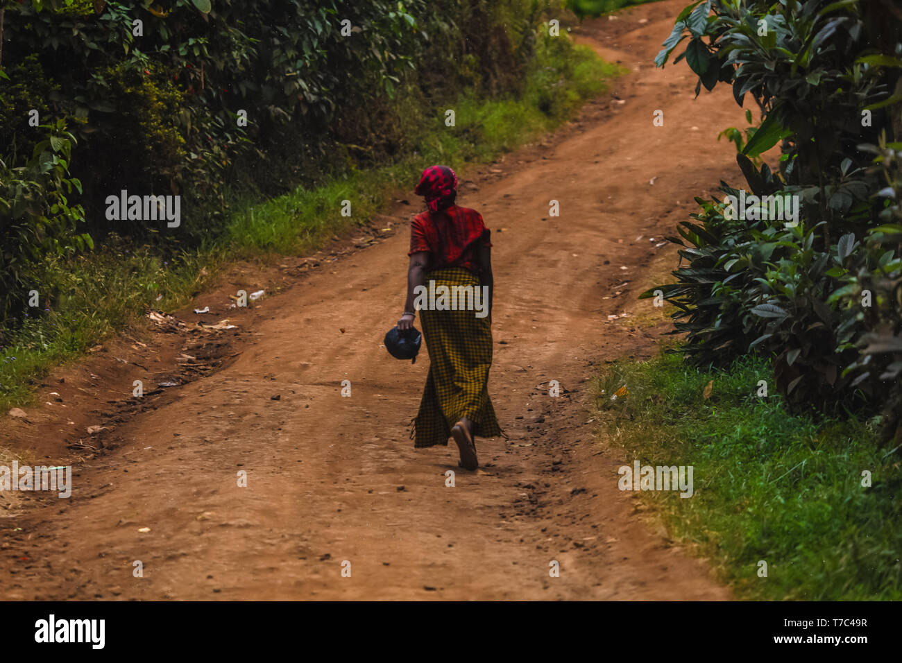 Woman walking on the road by herself, holding in her hand a purse. Wearing red scarf on her head, yellow long skirt. Wild nature out of town, green - Stock Image