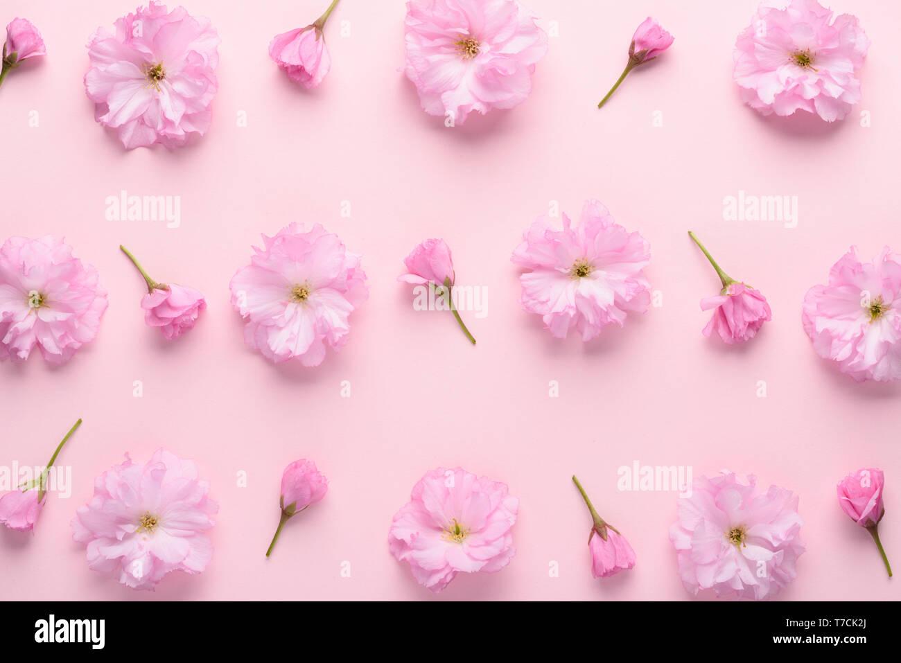 Cute Sakura Flowers Pattern On Pastel Pink Background Floral