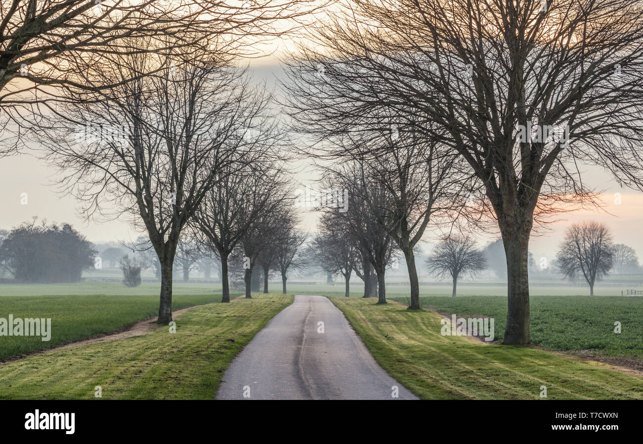 Alley of trees along empty countryside road in United Kingdom Stock Photo