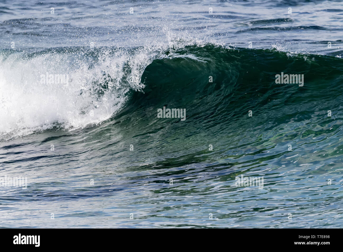 """I've been hearing a lot about a """"blue wave"""" in the news lately, so it occurred to me that I should do my best to cover this tidal force with news phot - Stock Image"""
