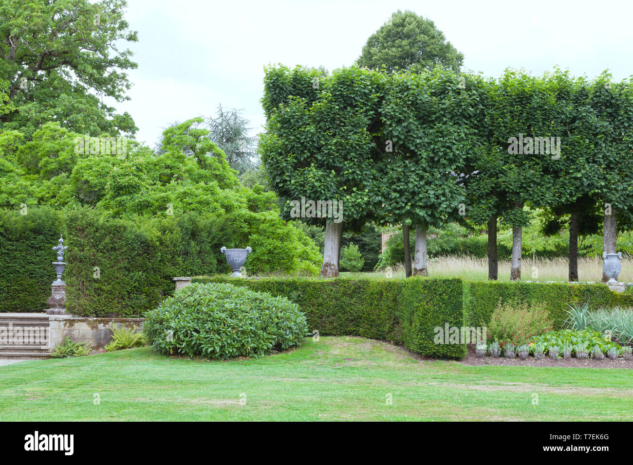 Landscaped garden trimmed hedge, leafy trees, evergreen shrubs, ornamental flower pots, on a sunny summer day in an English countryside . - Stock Image