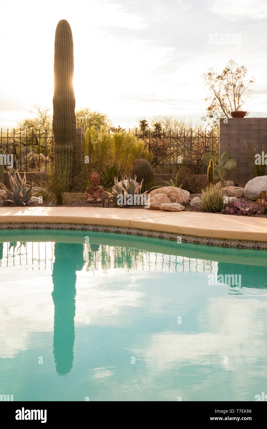 Swimming Pool And Drought Tolerant Xeriscape Garden With Cactus And Succulent Plants In The American Desert Southwest Tucson Arizona United States Stock Photo Alamy