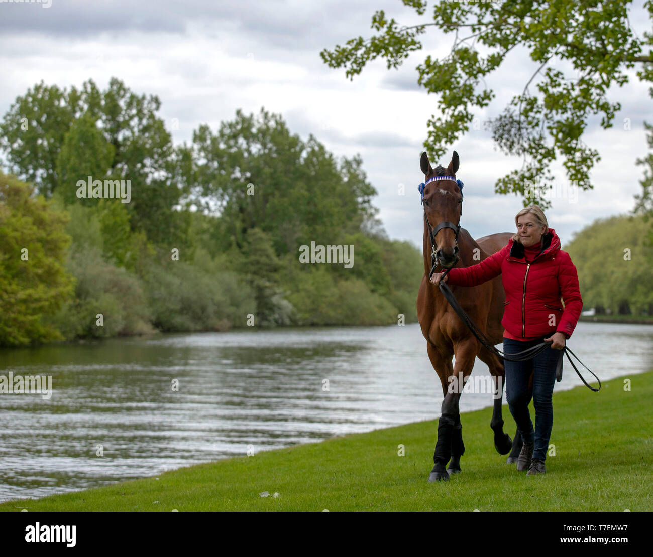Former racehorse Cue Card with Katie Jerram at Windsor Castle, Windsor. - Stock Image