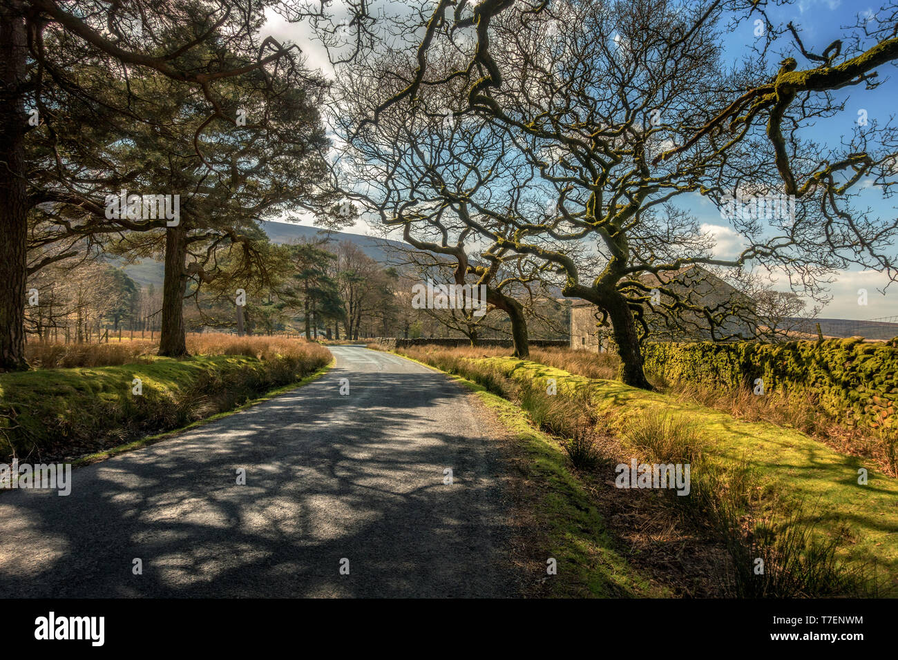 Picturesque landscape view of the road through twisted trees in the beautiful Trough of Bowland, Lancashire - Stock Image