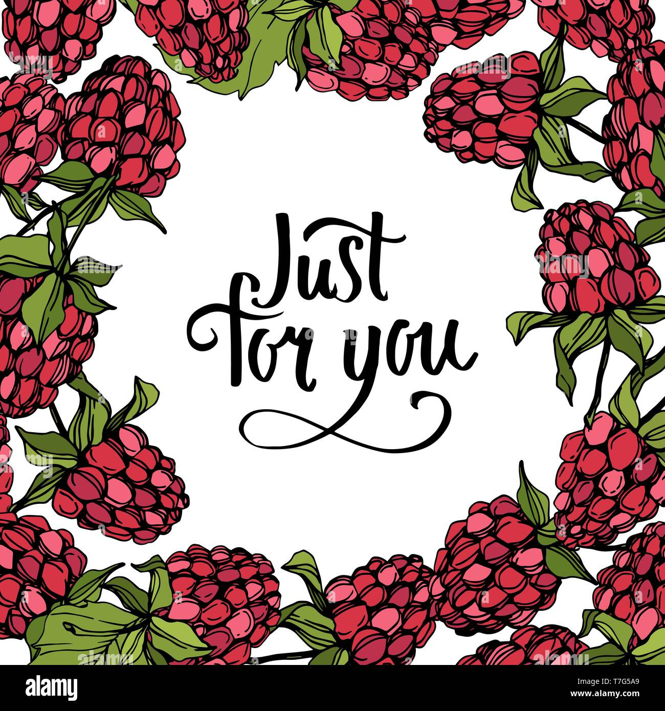 Vector Raspberry Healthy Food Isolated Red And Green Engraved Ink Art Frame Border Ornament Square Stock Vector Image Art Alamy