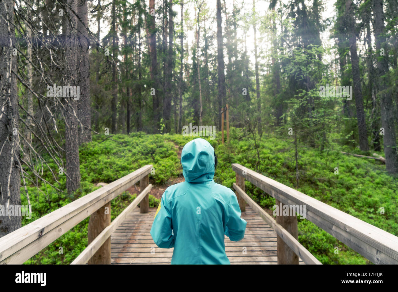 Young woman walking in boreal forest seen from behind her. Stock Photo
