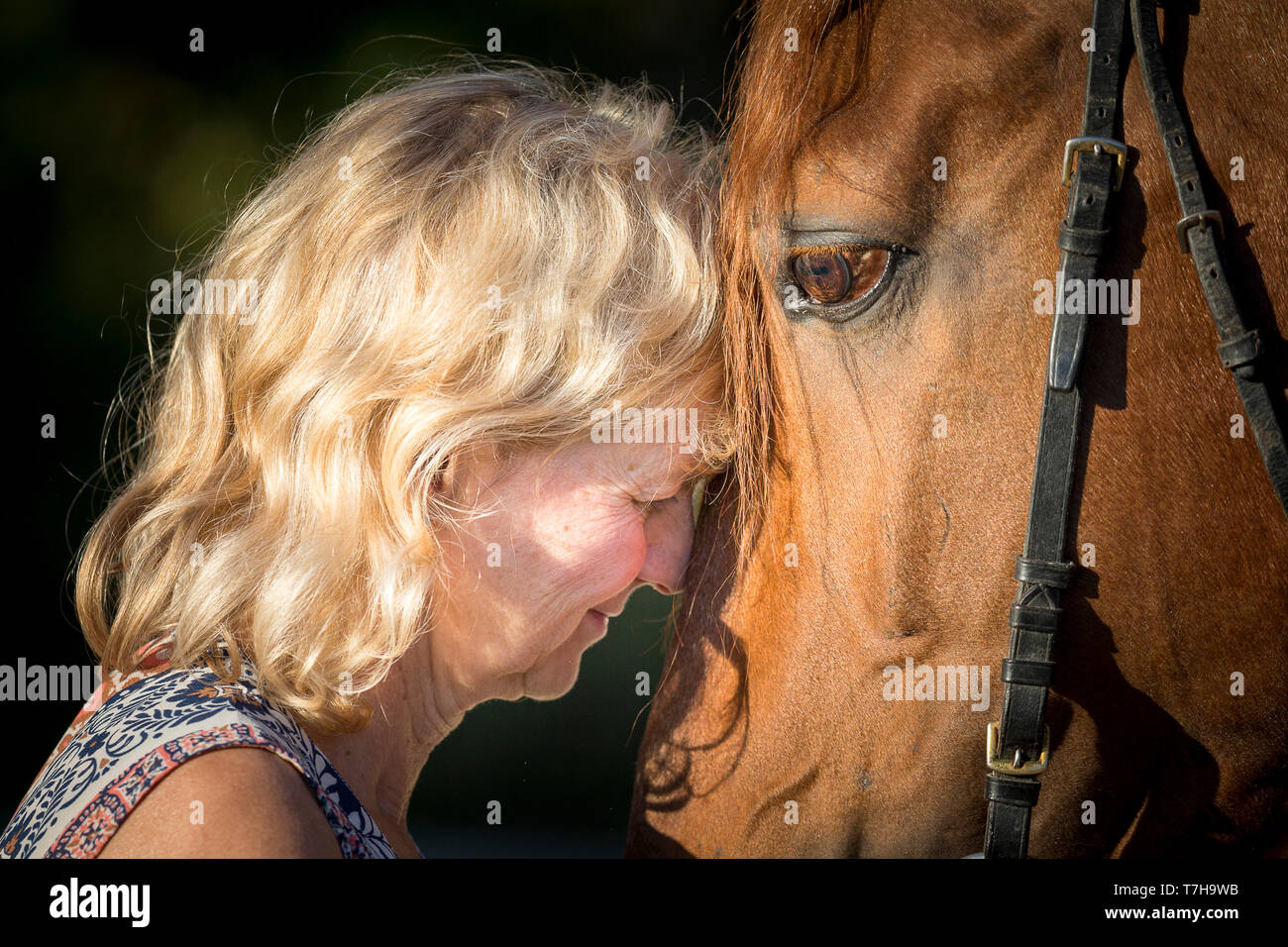 Lusitano. A woman clings her head to the head of the sorrel stallion Sabao. Germ,any - Stock Image