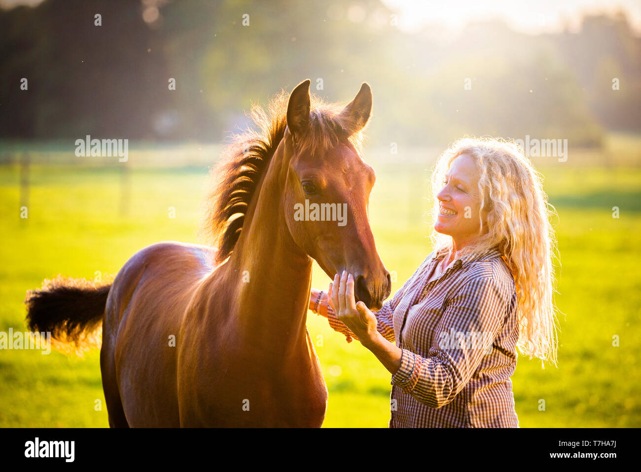 Iberian Sport Horse. Andrea Jaenisch fondling a bay foal on a pasture. Germany Stock Photo