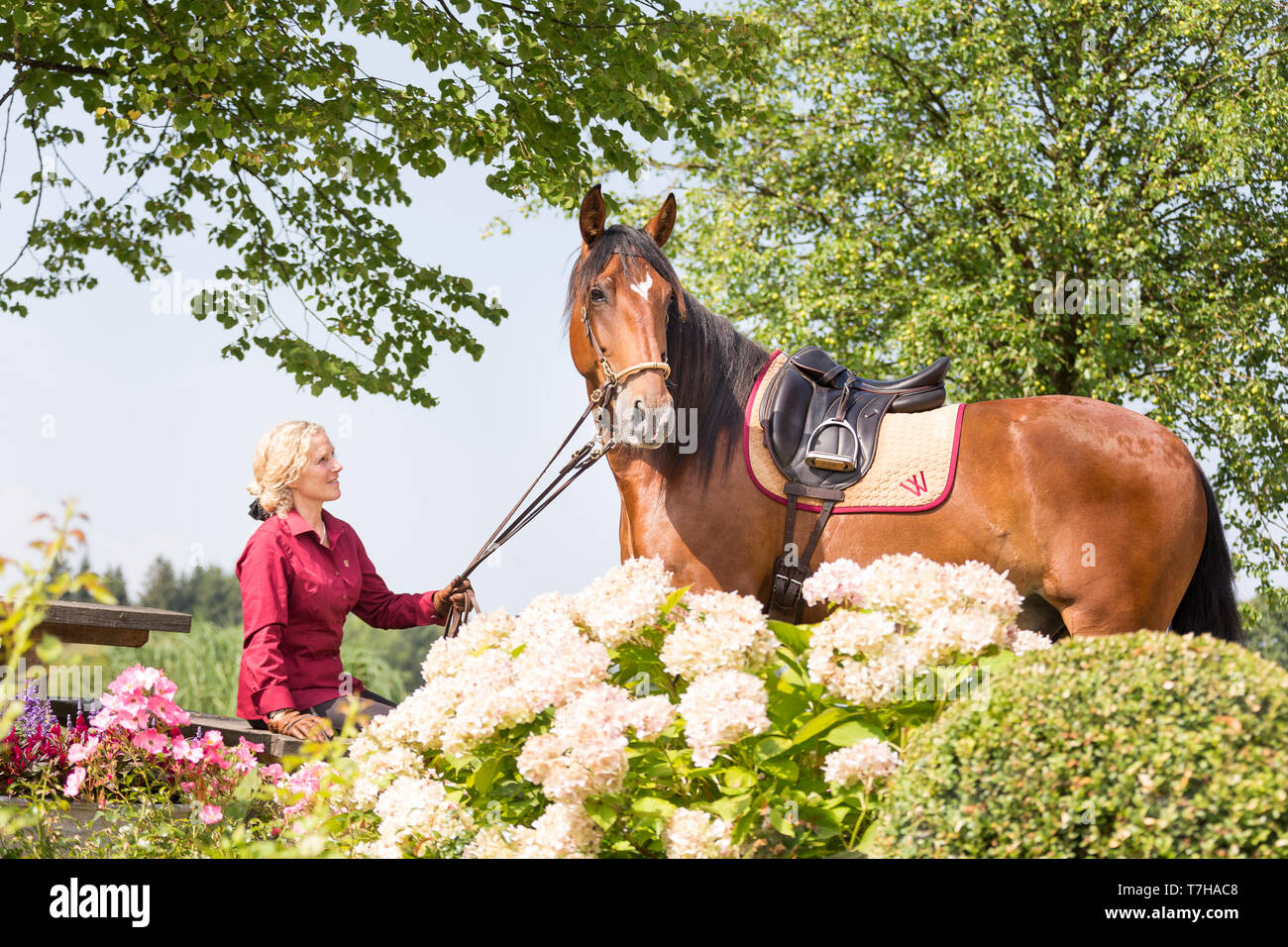 Iberian Sport Horse. Andrea Jaenisch sitting in the garden of stud Weng, holding bay horse on the rein. Amerang, Bavaria, Germany - Stock Image