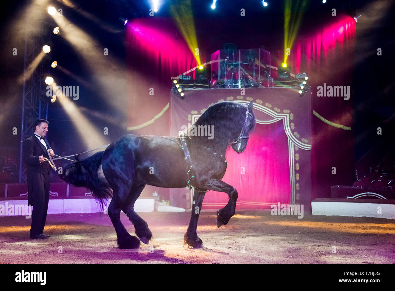 Louis Knie junior in his circus, showing a Friesian stallon at long-rein, performing a piaffe. Austria. Austria - Stock Image