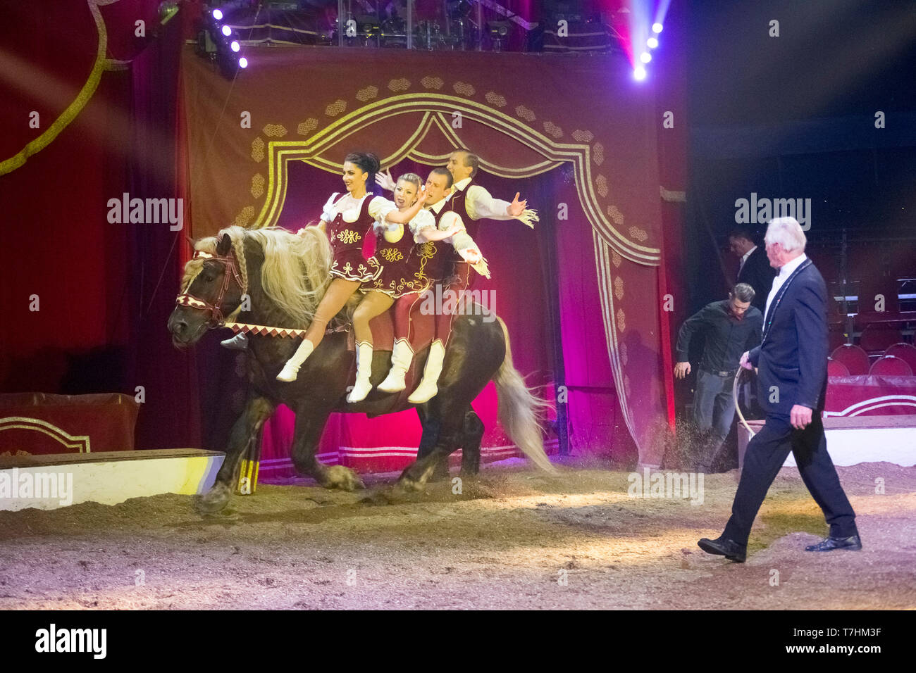 Performers on the back of a Russian Heavy Draft Horse during an show at the circus Louis Knie junior, Austria - Stock Image