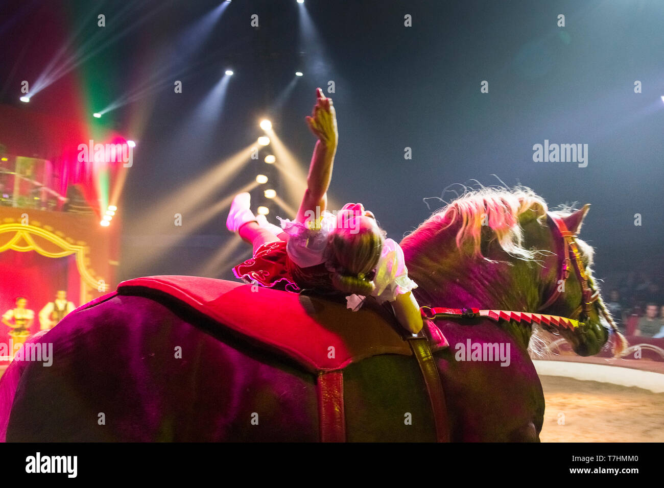 Performer lying on the back of a Russian Heavy Draft Horse during an show at the circus Louis Knie junior, Austria - Stock Image