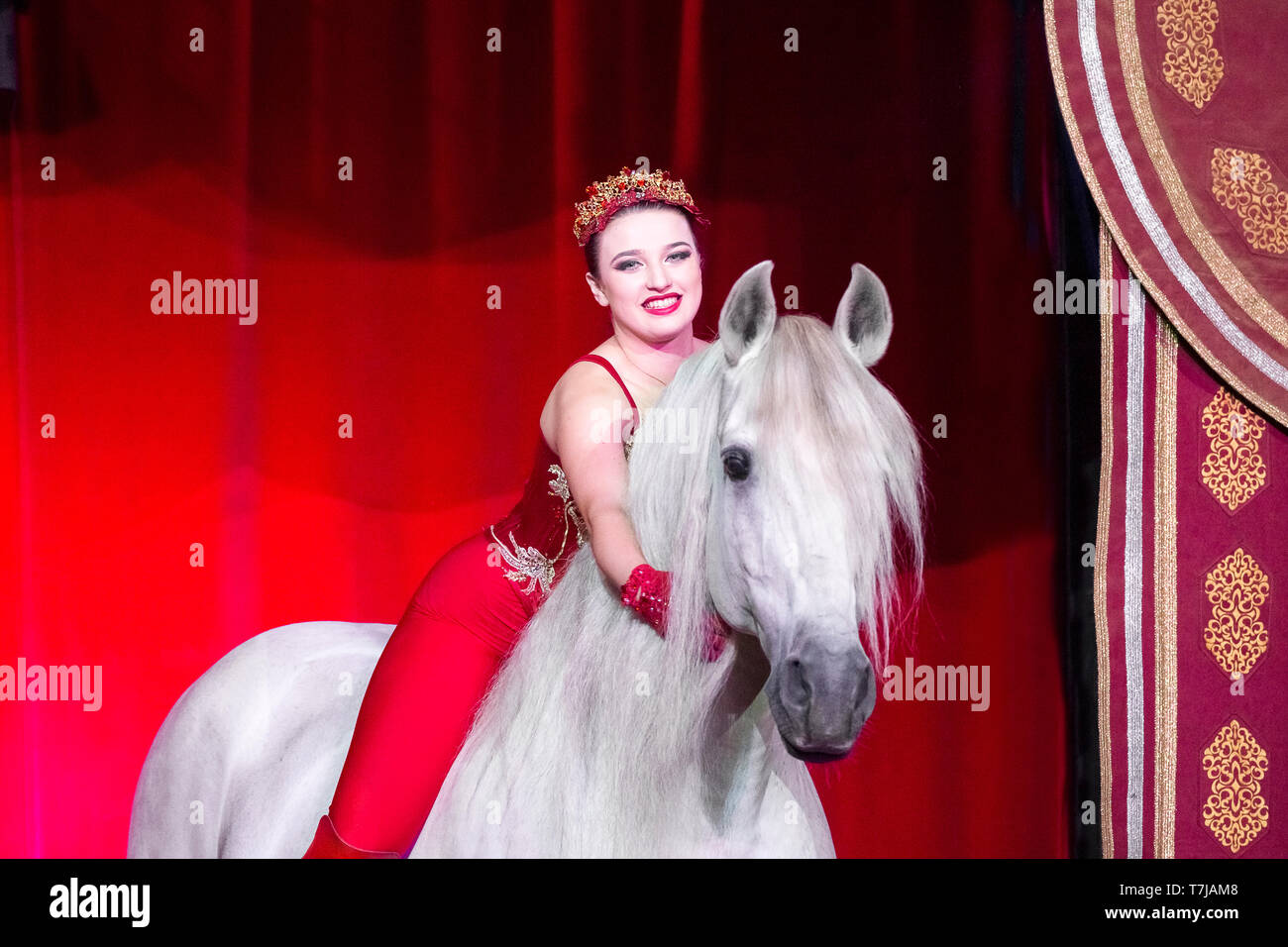 Pura Raza Espanola, Andalusian. Gray stallion and performer Sara Biasini-Berousek in a circus, standing in front of a red curtain. Austria - Stock Image
