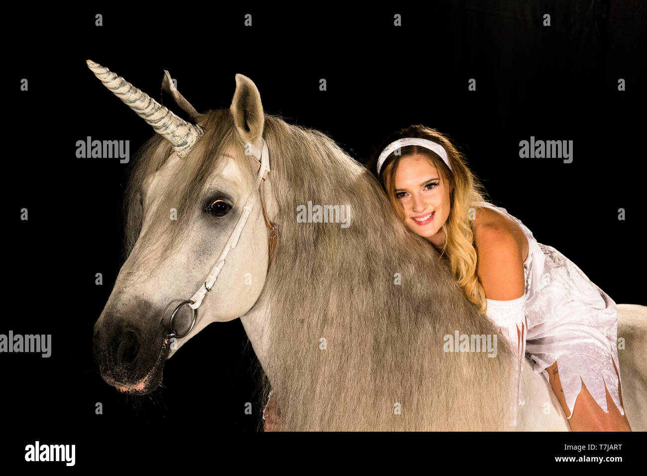 Young woman (fairy, virgin) on back of unicorn (Pure Spanish Horse with attached horn). Germany - Stock Image