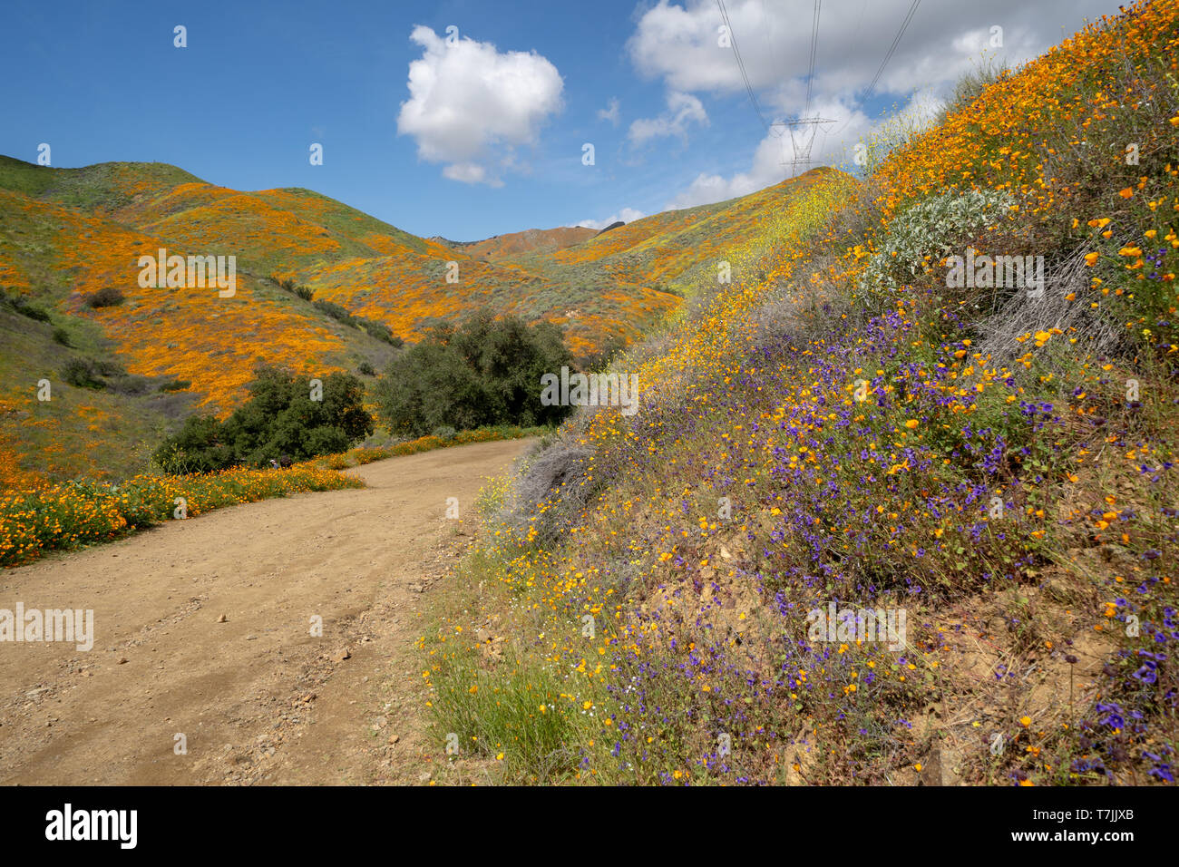 Trail of Walker Canyon during the Poppy wildflower superbloom - Stock Image