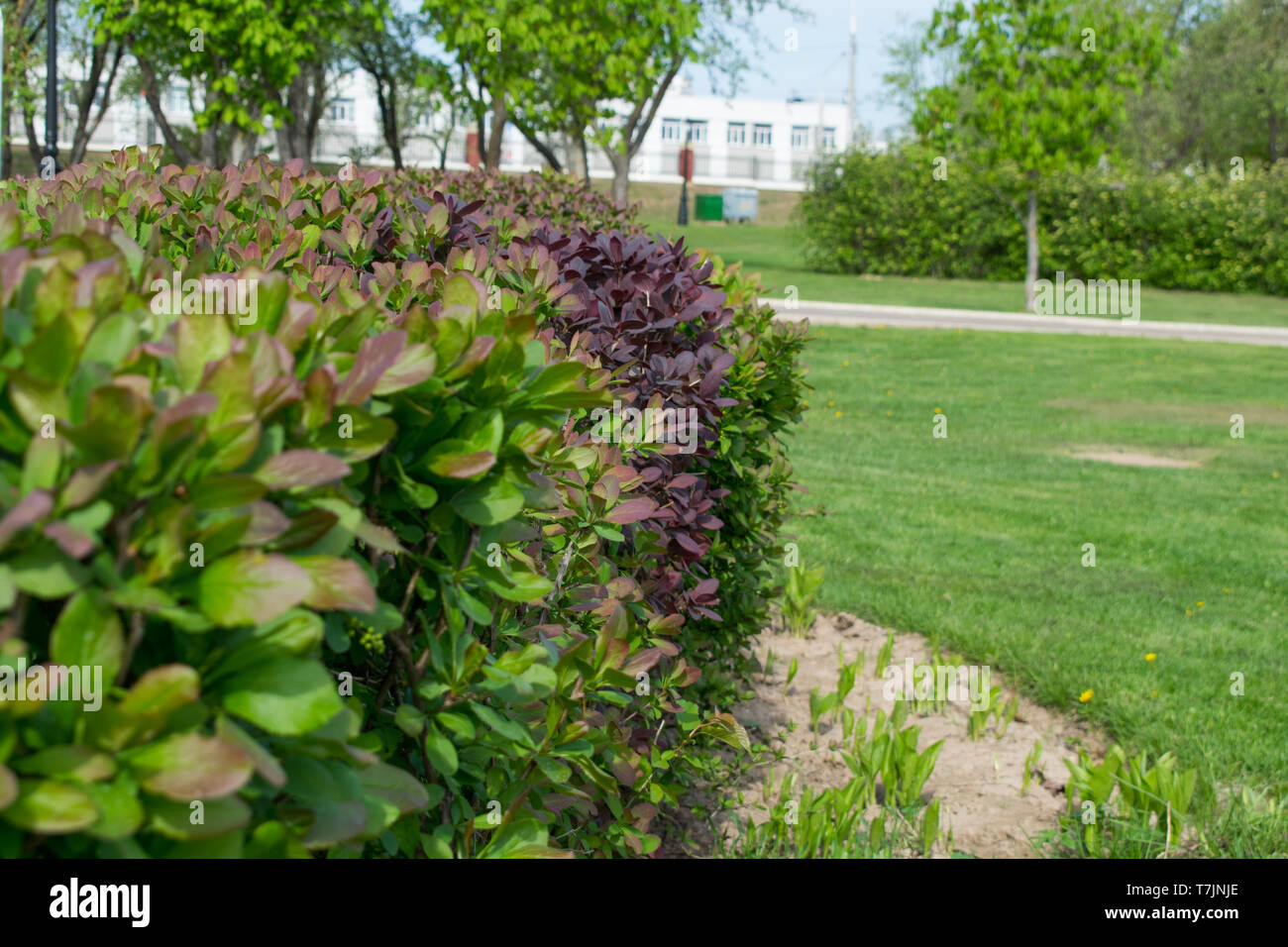 Plants Growing In The Spring Park Flowering Shrubs Flowers Stock