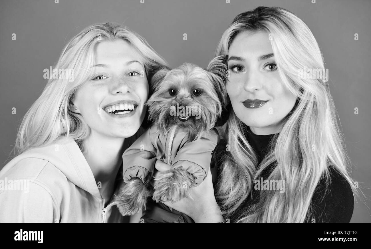 Blonde girls adore little cute dog. Women hug yorkshire terrier. Yorkshire terrier is very affectionate loving dog that craves attention. Cute pet dog. Yorkshire Terrier breed loves socialization. - Stock Image
