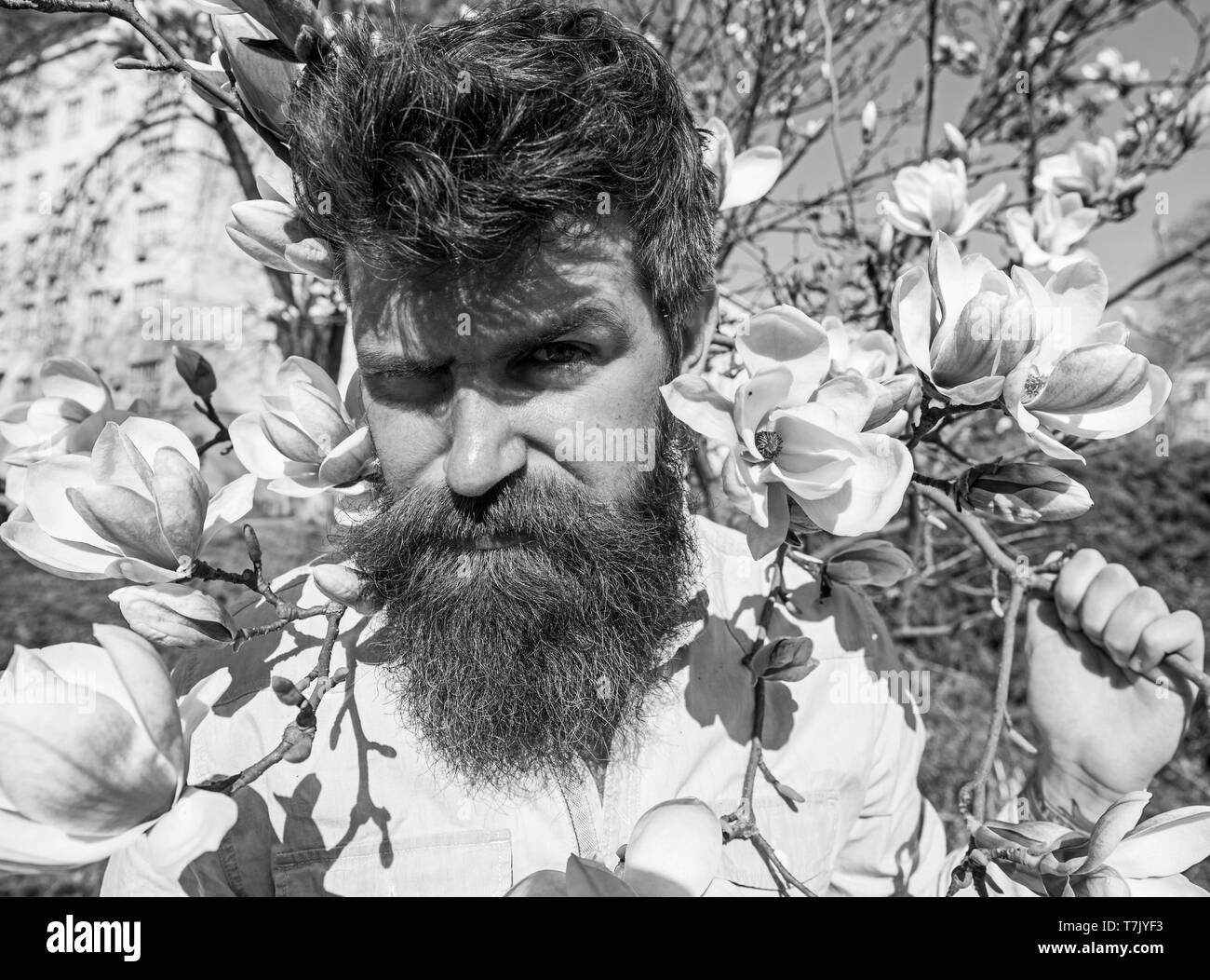 Guy with grimace on face because of bright sun. Sunny day concept. Man with beard and mustache, hipster posing near magnolia flowers and branches on background, on sunny day. - Stock Image