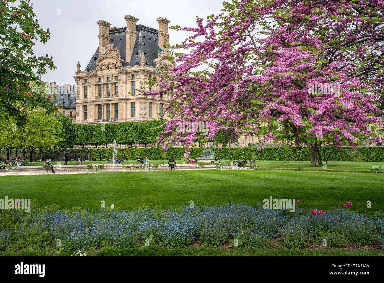 Frühling im Park Jardin des Tuileries, Paris, Frankreich  | spring at the park Jardin des Tuileries, Paris, France - Stock Image