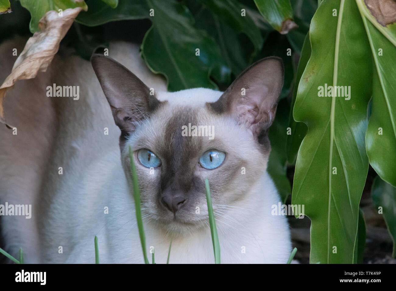 cat in a garden - Stock Image
