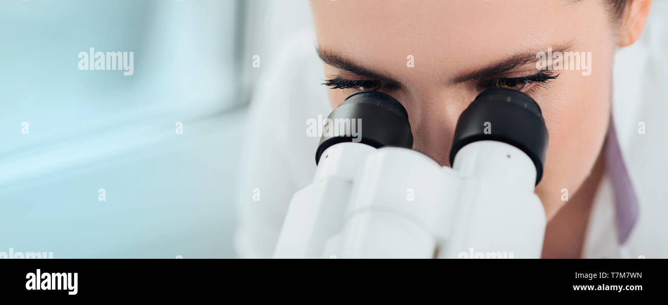 Scientist using microscope in lab, close-up. Laboratory technician while work - Stock Image