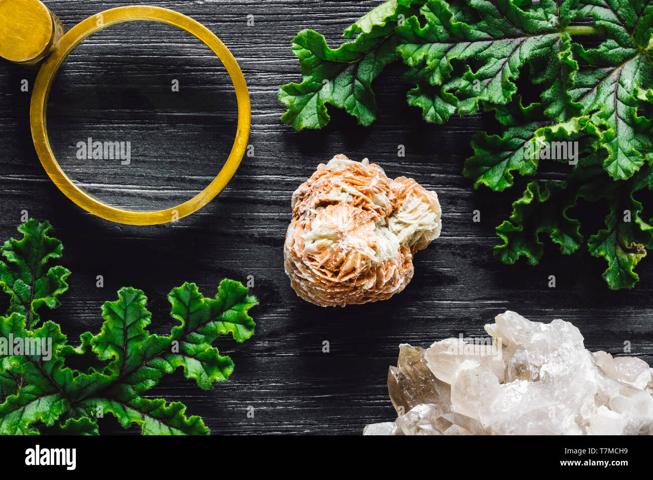 Magnifying Glass with Selenite Rose, Quartz Cluster and Foliage on Black Stained Wood - Stock Image