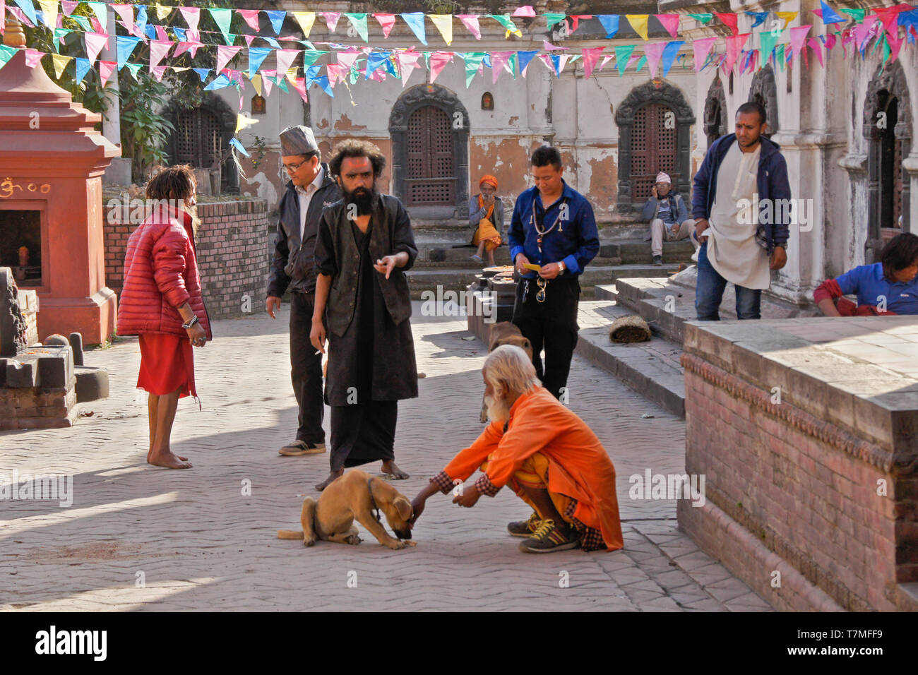 A Hindu holy man (sadhu) feeds a dog in the courtyard of a temple at Pashupatinath complex, Kathmandu Valley, Nepal - Stock Image