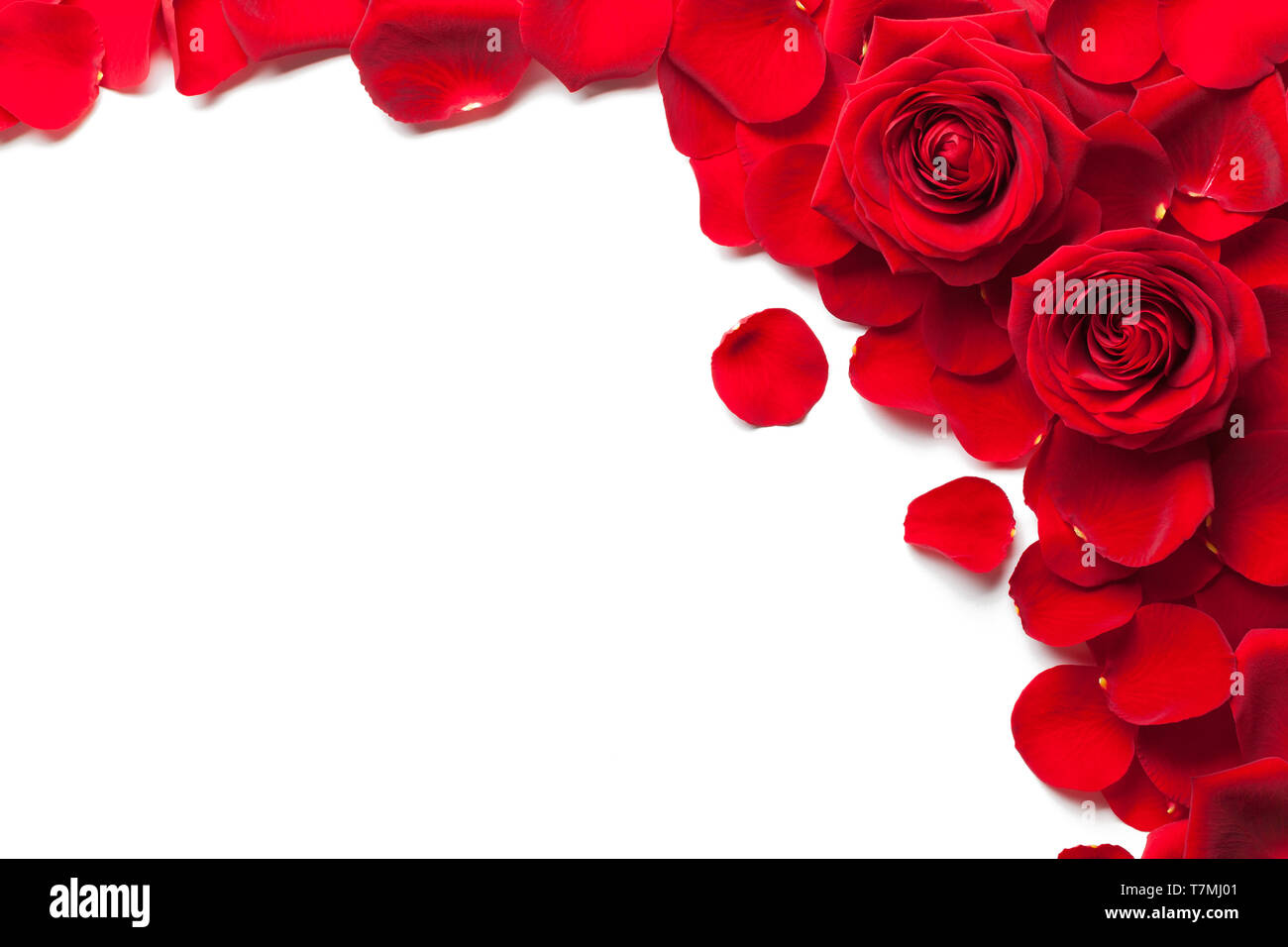 Red Roses And Rose Petals Isolated White Background Stock Photo