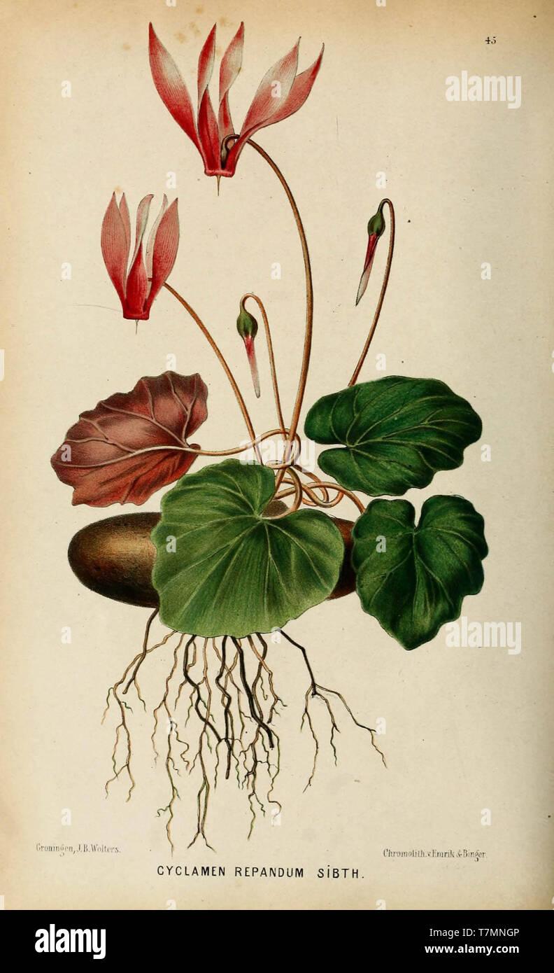 Neerland's Plantentuin - Stock Image