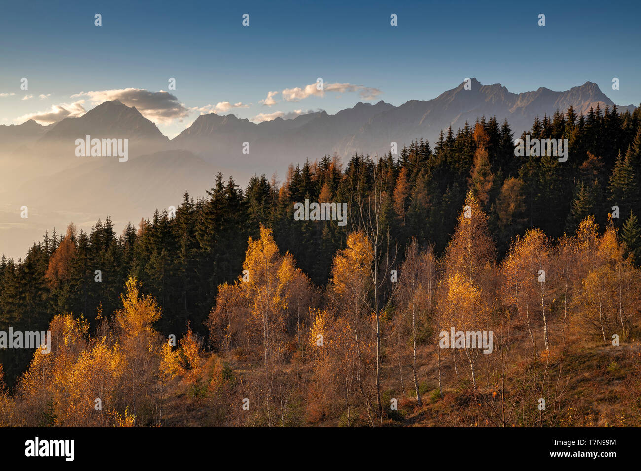 Autumnal mountain landscape with birches, larches and spruces at sunset, in background the Karwendel mountains - Stock Image