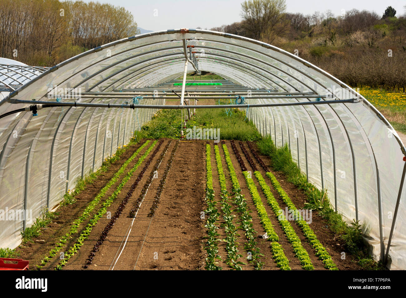 Seedling in a green house - Stock Image