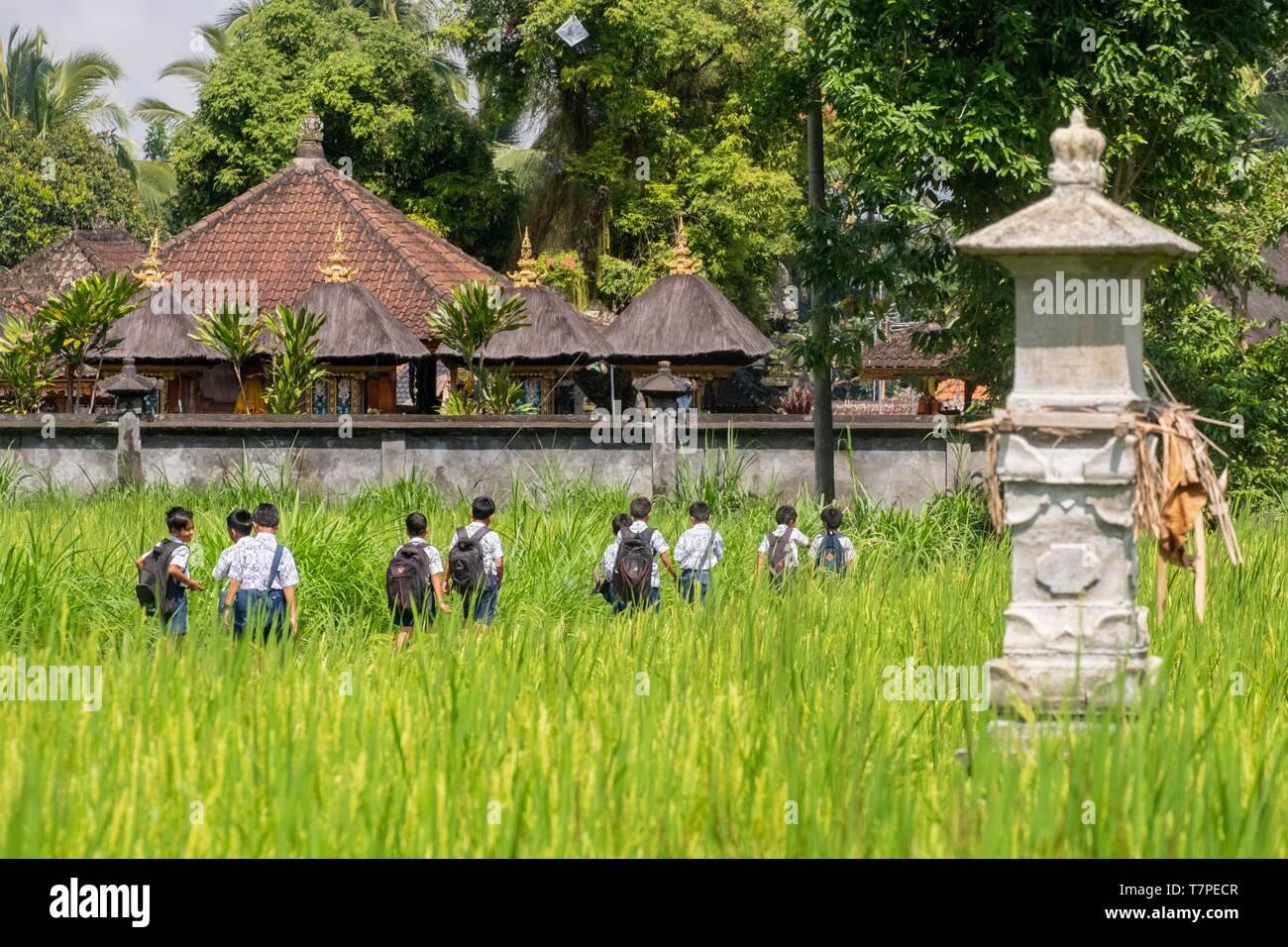Indonesia, Bali, East Coast, schoolchildren after school among rice paddies - Stock Image