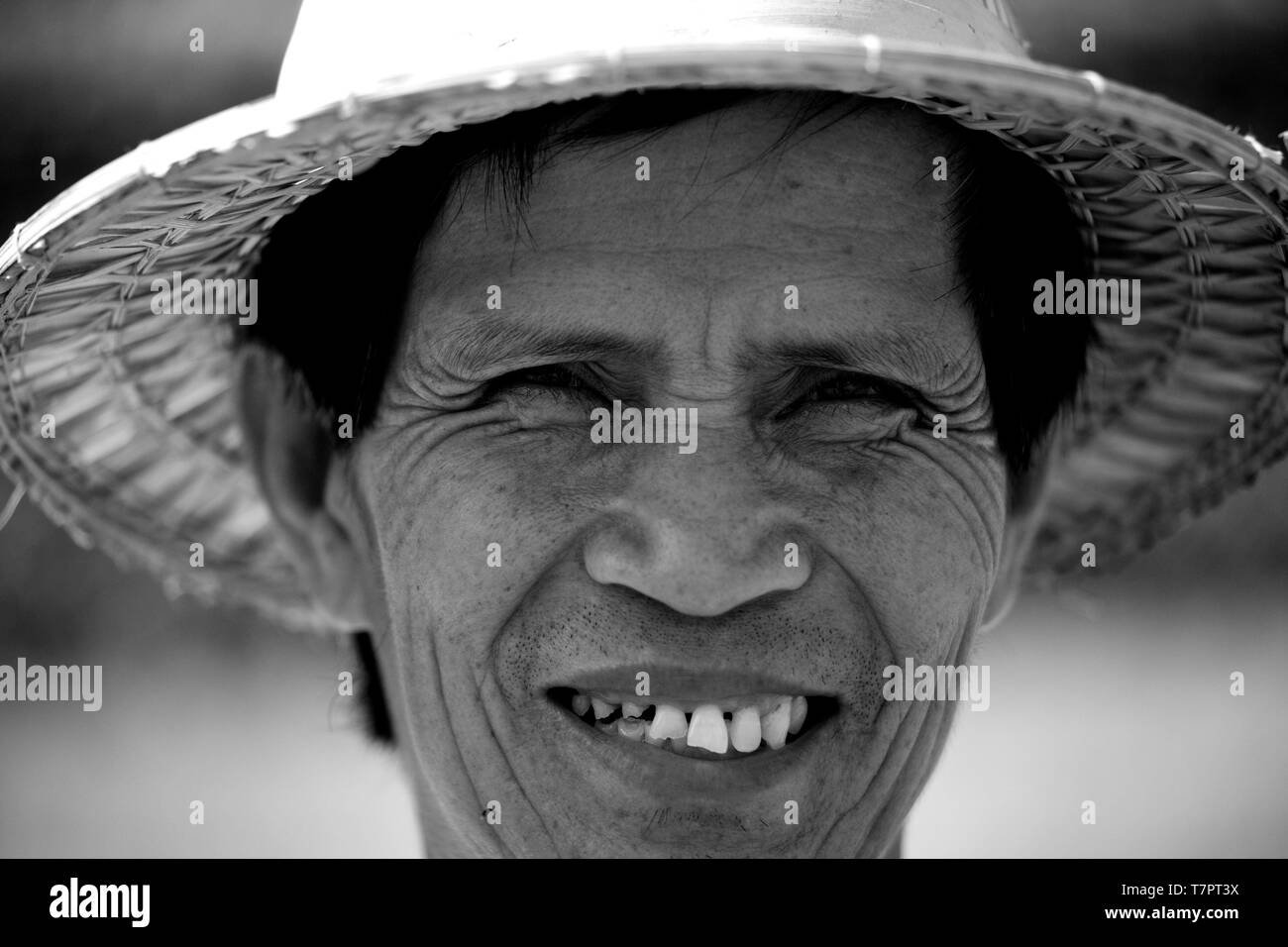 Thailand, Thai rice, worker portrait in paddy fields north - Stock Image