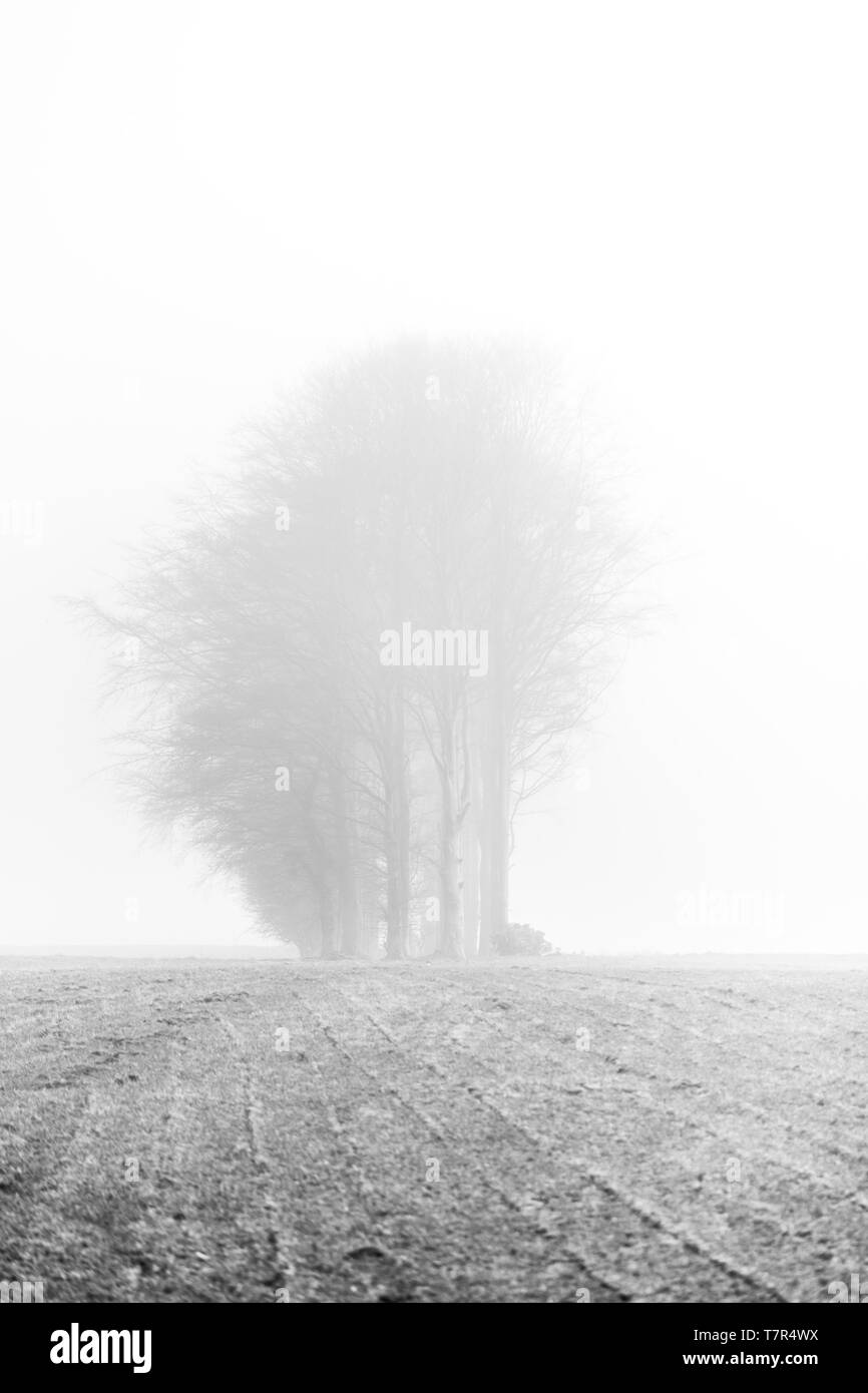 A stand on bare winter trees in an empty field in heavy fog in Northumberland, creating an eerie yet peaceful atmosphere. Stock Photo
