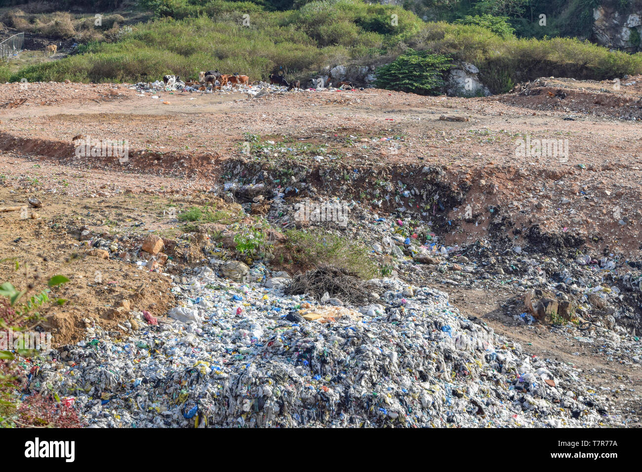 a garbage dump and some animals seen in Sri Lanka - Stock Image