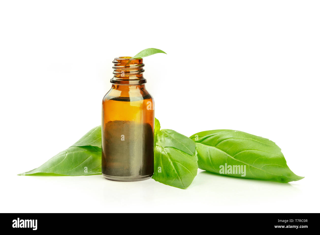 Basil essential oil. A bottle with fresh basil leaves on a white background with a place for text - Stock Image